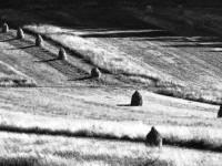 fot. Daniel Ejsymont - wyróżnienie